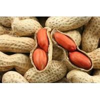 Все про арахис