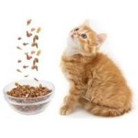 Выбираем корма для кошек правильно.